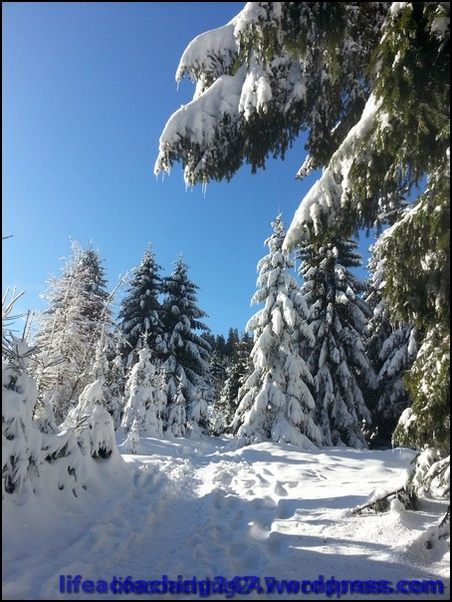 lifecoaching247_invierno