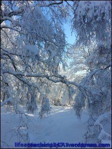 lifecoaching247_invierno20